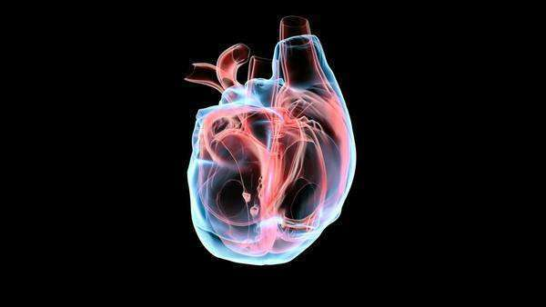 Animation of the human heart rotating against a black ...