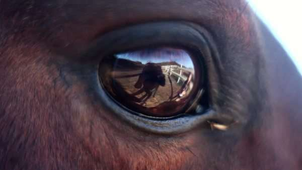 Close-up on horse's eye revealing reflection of person Royalty-free stock video