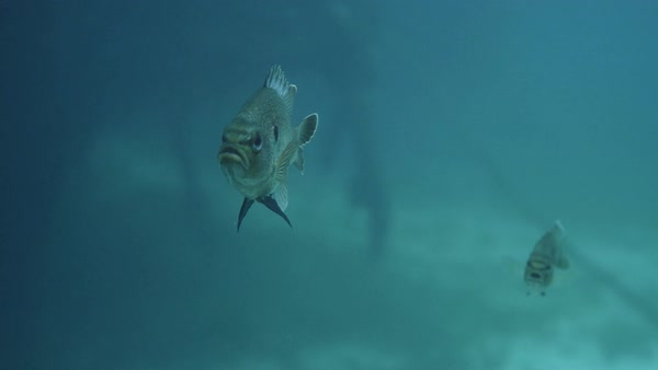Underwater shot of fish. Royalty-free stock video