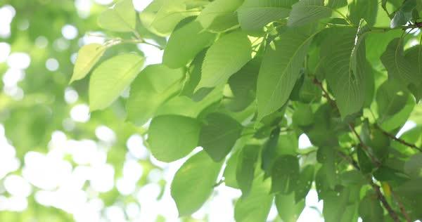 Pildiotsingu leaves in the wind tulemus