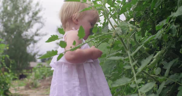 Young baby girl holding a green tomato Royalty-free stock video