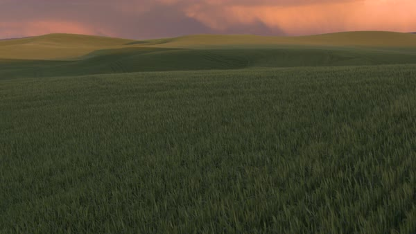 Aerial shot of a field at sunset Royalty-free stock video
