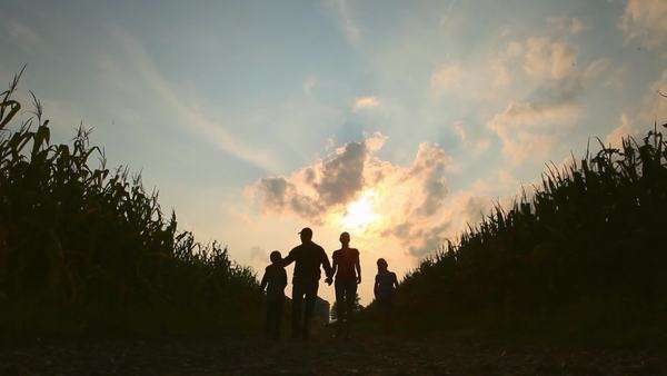 Silhouette of caucasian family walking between crops at dusk Royalty-free stock video