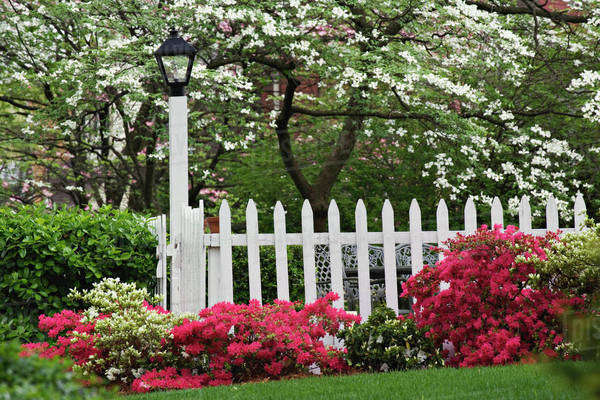Image result for free louisville spring images