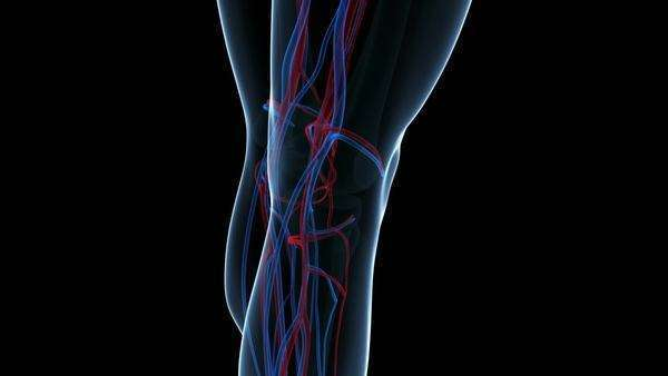 Human circulatory system, animation. The journey up the ...