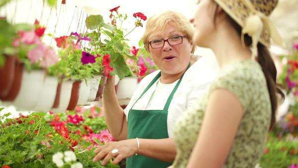 Two florists tending to flowers together. Royalty-free stock video