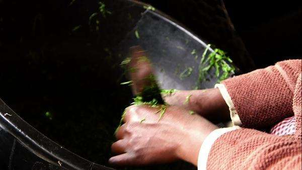 Close-up of hands chopping greens Royalty-free stock video