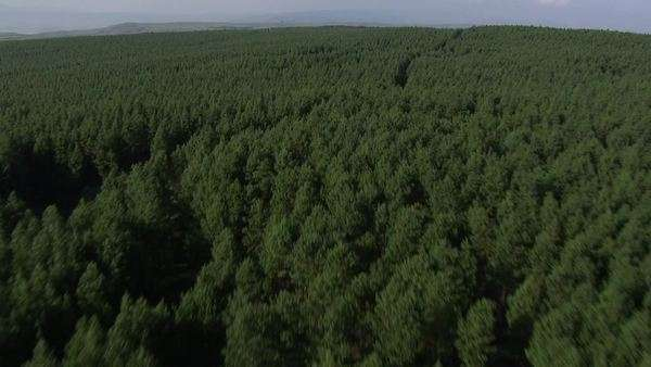 Aerial shot over a forest Rights-managed stock video
