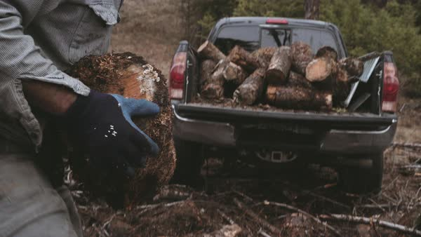 Hand-held shot of a man throwing logs on a pickup truck Royalty-free stock video