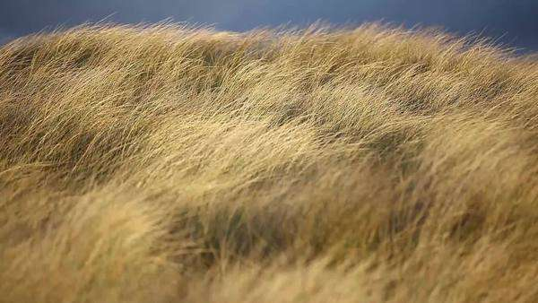 Medium shot of the grass bending in the wind on the shore Royalty-free stock video