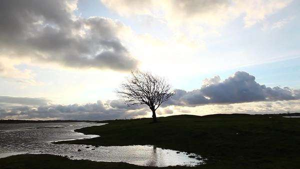 Wide shot of a bare tree on the shore in Malmo Royalty-free stock video
