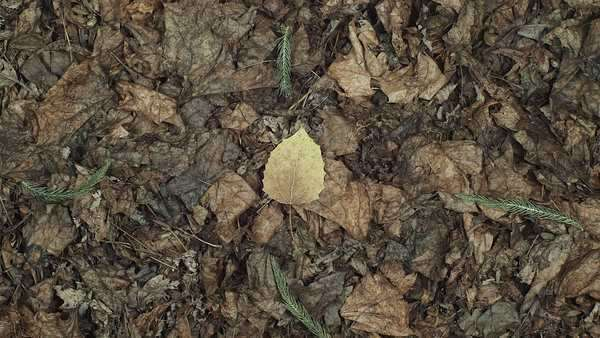 Stop motion of dry leaves on the ground Royalty-free stock video