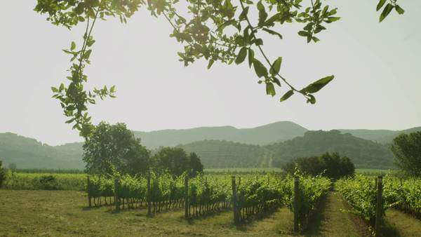 Beautiful landscape of vineyard in mountains on a sunny day. Royalty-free stock video