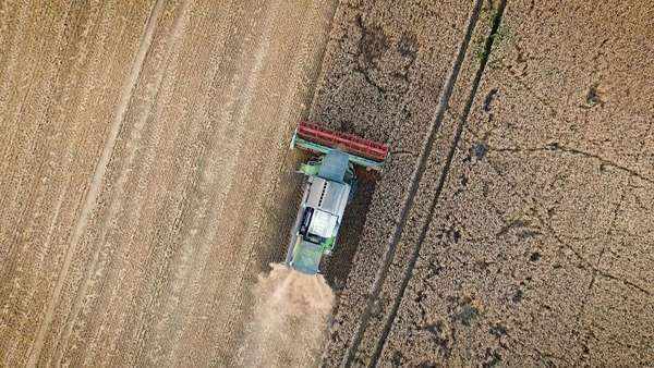 Aerial drone overhead shot of a combine harvester working in a field at sunset. Royalty-free stock video