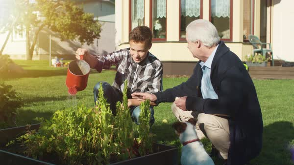 Grandfather and Grandson Watering Plants. Royalty-free stock video