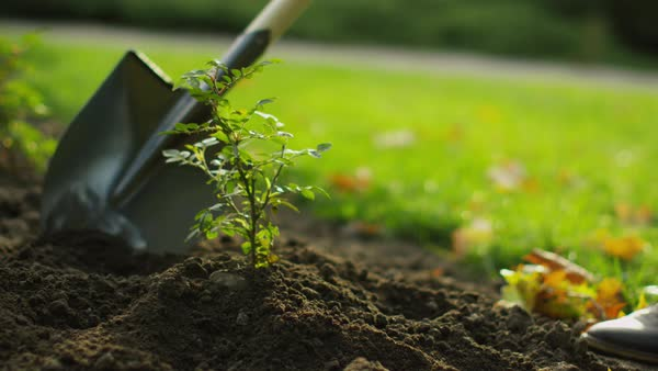 Close-up of a shovel tending plant in the garden Royalty-free stock video