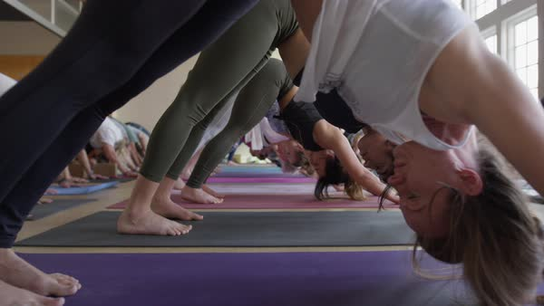 Medium slow motion zoom out shot of yoga class performing downward-facing dog Royalty-free stock video