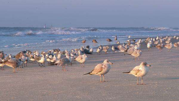 A flock of seagulls in the beach fly away in slow motion. Royalty-free stock video