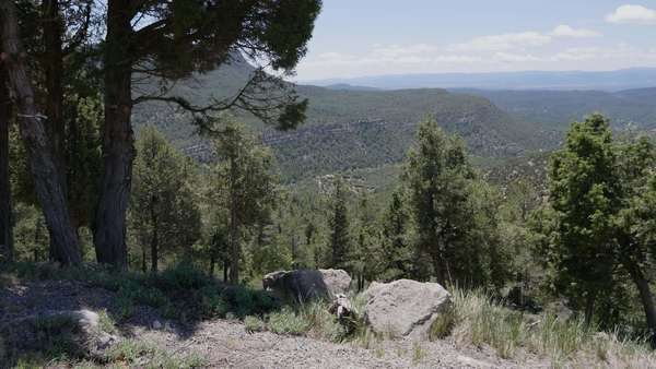 Pine trees stand on a slope in the Sierra de Gudar framing a view of distant ridges. Royalty-free stock video
