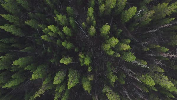 Oregon forest rise aerial Rights-managed stock video