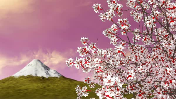 3d Animation Of Japanese Sakura Cherry Blossom Tree With Mount Fuji