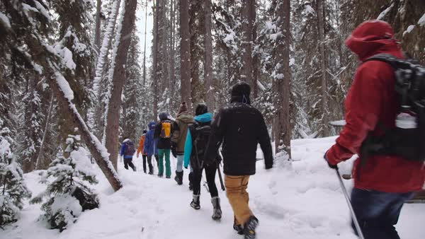 Wide-angle shot of hikers walking in a snowy forest in Johnston Canyon Royalty-free stock video