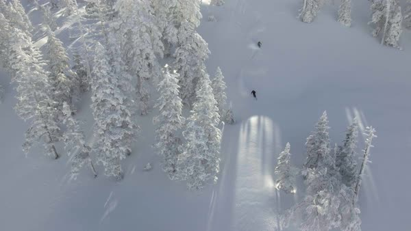 Drone shot of skiers sliding down a slope in a forest Royalty-free stock video