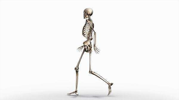 Computer animation of the female skeletal system walking on a transparent background, orbital view. Royalty-free stock video