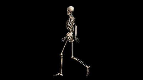 Computer animation of the female skeletal system walking on a black background, orbital view. Royalty-free stock video
