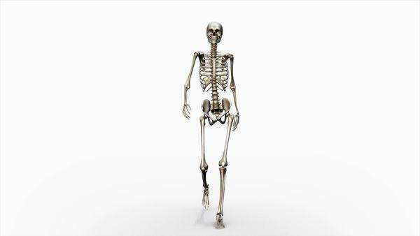 Computer animation of the female skeletal system walking on a transparent background, front view. Royalty-free stock video