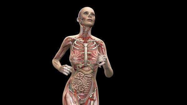 Computer animation of the female body running showing internal organs and muscles, waist up. Royalty-free stock video