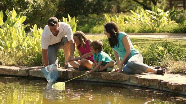 Family in park fishing with nets in lake. Royalty-free stock video