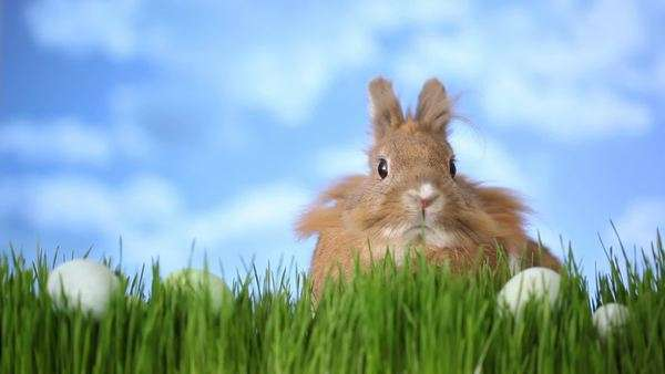 Easter bunny sitting in grass with eggs Royalty-free stock video