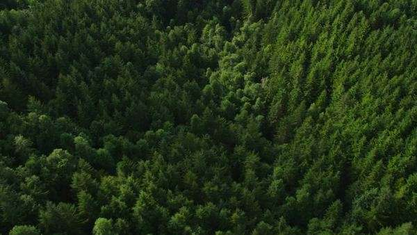 Logging operation in Oregon forest, aerial shot Royalty-free stock video
