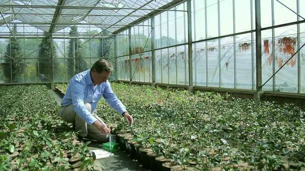 Scientist examining flora in a greenhouse Royalty-free stock video
