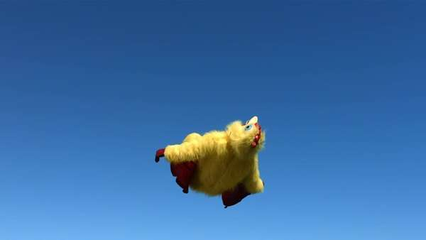 Chicken backflip, slow motion Royalty-free stock video