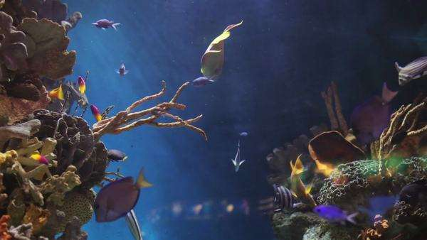shot of fish in an aquarium Royalty-free stock video
