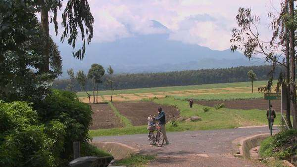 A man walks his bicycle down a rural road in Rwanda with the Virunga volcanos in the background. Royalty-free stock video