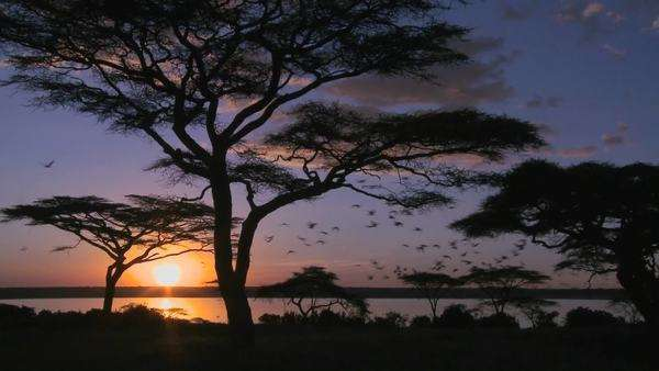Gorgeous and majestic shot of sunrise on the African plains with acacia trees foreground. Royalty-free stock video
