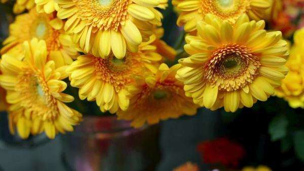 Gerbera flowers at flower stand Royalty-free stock video