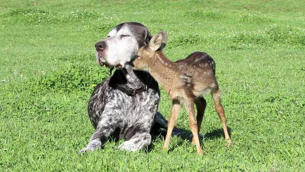 Dog and fawn sitting on grass Royalty-free stock video