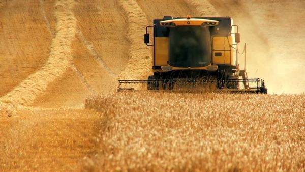 Combine harvester gathers the wheat crop Royalty-free stock video
