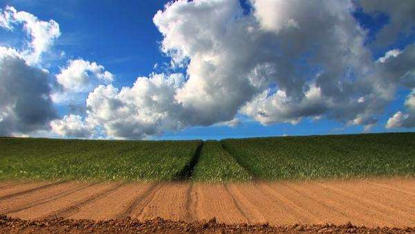 Dramatic timelapse of clouds & crops growing in a field Royalty-free stock video