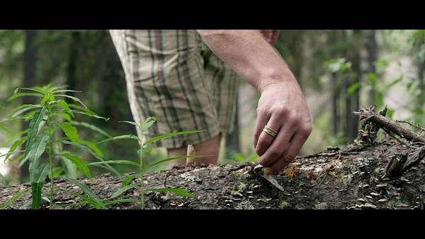 Close-up shot of man picking leaf of old tree trunk in forest Royalty-free stock video