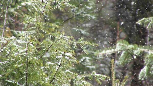 Snow falls on tree branches. Royalty-free stock video