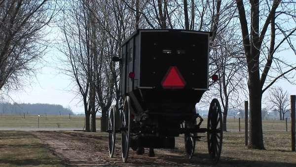 An Amish horse and buggy head toward the main road with their passengers and cautionary red triangle on the back of the buggy. Royalty-free stock video