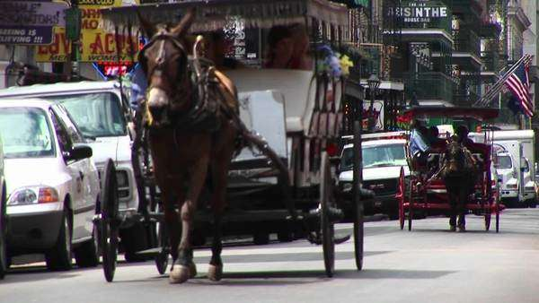 Mule buggies follow each other down a crowded street in New Orleans. Royalty-free stock video