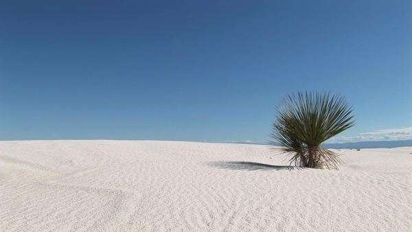 Long-shot of a plant at White Sands National Monument in New Mexico. Royalty-free stock video