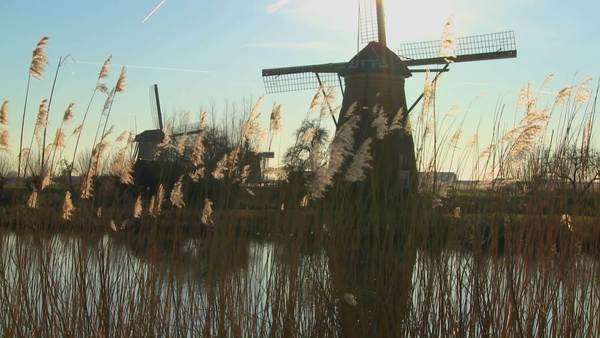 A slow tilt up to windmills standing along a canal in Holland. Royalty-free stock video