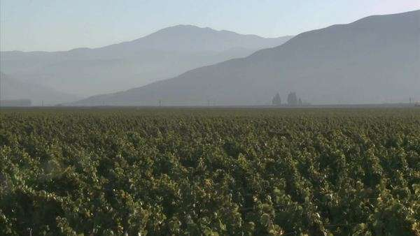 Pan across a Salinas Valley vineyard in the Monterey County wine country of California Royalty-free stock video